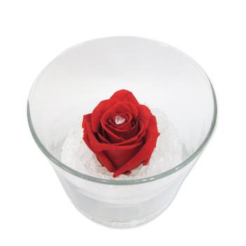 Червена вечна роза