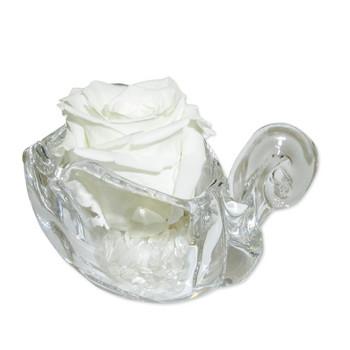Бяла вечна роза
